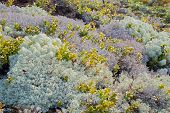 picture of lichenes  - Abstract background image of lichen and moss - JPG