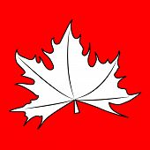 stock photo of canada maple leaf  - The maple leaves on a white background - JPG