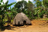 picture of hunters  - Head hunters minority village on the Timor island near Soe. Traditional grass hut. Nusa tenggara. ** Note: Visible grain at 100%, best at smaller sizes - JPG