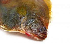 stock photo of flounder  - The Fresh fishes flounder on white background - JPG