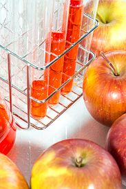 pic of modification  - vegetable test apple Genetic Modification Scientific Experiment - JPG