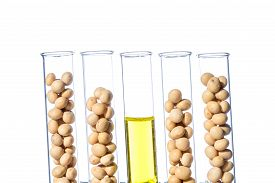picture of modifier  - Soybean genetically modified Plant Cell laboratory - JPG