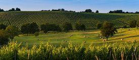 stock photo of bordeaux  - Vineyard Sunrise  - JPG