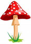 Mushroom Red