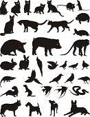 Animal animal de estimação
