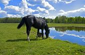 foto of beautiful horses  - Beautiful spring view of the wood with a horse drinking water - JPG