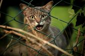 Stray Cat Looking And Meowing Behind A Fence poster
