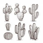 Hand Drawn Cactus. Western Desert Cacti Mexican Plants In Sketch Style. Cactuses Doodle Vector Set.  poster