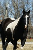 stock photo of white horse  - Black  - JPG