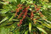 Closeup of red tropical berries in jungle
