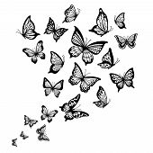 Butterflies Flow. Butterfly Wing, Spring Flying Insect And Flight Wave Vector Background Illustratio poster