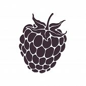 Vector Illustration. Silhouette Of Blackberry Or Raspberry Fruit With Stem. Healthy Diet And Vegetar poster