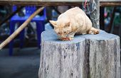 Cute Hungry Orange Striped Pattern Cats Eating Pet Food At Street Food Market. Animal Care, Adoption poster
