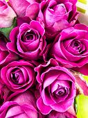 Bouquet Of Fresh Purple Roses. Delicate Purple Flowers. Group Of Purple Flowers. poster