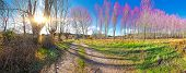 Scenic Nature Landscape And Path.colorful Meadow And Forest Scenery.beautiful Natural Landscape With poster