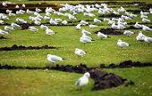 image of schoenbrunn  - Seagulls in Schoenbrunn Castle Garden - JPG