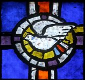 Holy Spirit Bird