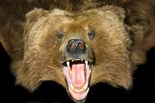 Grizzly Bear Pelt