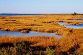 Maryland Marsh