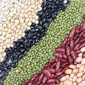 Varieties Of Beans