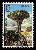 Árvore dragão