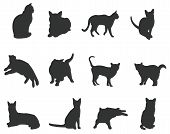 Sets Of Silhouette Cats, Create By Vector