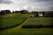 Campos de maíz (maíz)