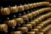 Wine Bottles Winery