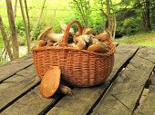 basket full of eatable mushrooms boletus on the table in a forest