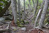 Inside A Forest At Tierra Del Fuego