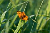Butterfly Sits On A Green Grass