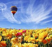 Beautiful spring weather, beautiful big balloon flies over the field. The huge field of white, red