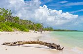 Virgin tropical beach at Coco Key (Cayo Coco) in Cuba with dead tree trunk in the foreground
