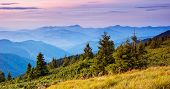 Evening landscape with fir trees in the mountains, Ukrainian Carpathians, Europe