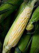 Cob Of Corn