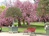 Springtime - Cherry Blossom