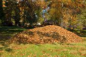 Raking Leaves Large Leaf Pile