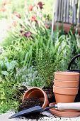 Jardinagem de ervas