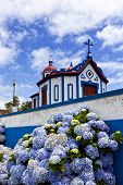 Hydrangea flowers in front of the chapel on top of Monte Santo at Agua de Pau, Sao Miguel island, Az