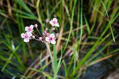 Rosa und weiße Blumen Fluss