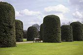 Pollard Trees In Hyde-park