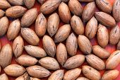 Pecan Nuts On Red