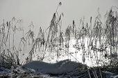 Lake, Ice Reeds And Fog