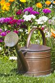 Copper Watering Can Stands In Front Flowerbed