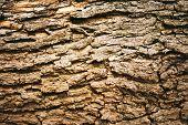 Brown Tree Bark poster