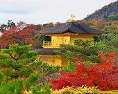 Temple of the Golden Pavilion on Kyoto, Japan. nov 28