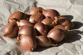 Shallots On Wrapping Paper