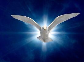 picture of holy  - Holy Spirit Bird on Royal Blue Starburst Background - JPG