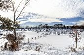 pic of blanket snow  - A beautiful blanket of snow covers a tree farm near Guilderland New York.