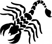 foto of venom  - Vector illustration of a venomous predatory scorpion - JPG